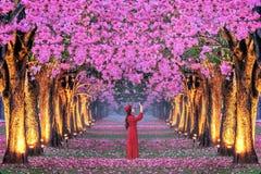 File di bei alberi rosa dei fiori fotografia stock