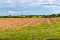 File di giovani piante della lattuga sul campo dell'azienda agricola Fotografie Stock Libere da Diritti