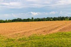 File di giovani piante della lattuga sul campo dell'azienda agricola Fotografie Stock