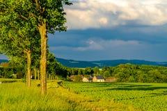 File di giovani piante verdi su un campo fertile con suolo scuro in sole caldo sotto il cielo drammatico Immagini Stock