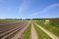 File di modo e della patata di Minster nella primavera Immagine Stock Libera da Diritti