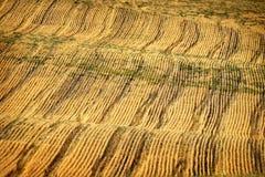 File e solchi sul campo arato per l'agricoltura del pungolo agricolo fotografie stock libere da diritti