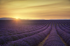 File senza fine di fioritura dei giacimenti del fiore della lavanda sul tramonto Valensol Immagini Stock