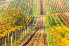 File variopinte delle vigne in autunno Strada campestre fra le vigne Paesaggio scenico di autunno della Moravia del sud in repubb Fotografia Stock