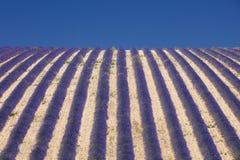 File viola astratte di lavanda in cielo Fotografia Stock Libera da Diritti