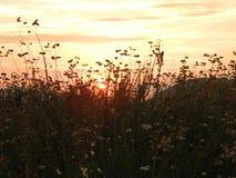 _Filed ο θέτω ήλιος Στοκ Εικόνες