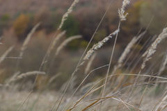 _Filed φθινόπωρο Στοκ Φωτογραφίες