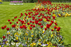 Filed of Colorful tulips Stock Photography