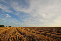 Filed after harvest Royalty Free Stock Photo