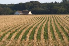 Filed and house. Harvested field and a farmhouse royalty free stock images