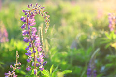 Filed in summer royalty free stock photography