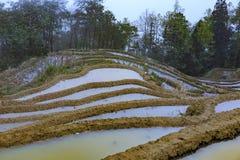 Fileds da almofada, terraço do arroz na província de Yunnan fotografia de stock royalty free