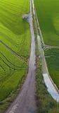 Fileds do arroz e efeito liso da terra da estrada Fotografia de Stock Royalty Free