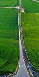 Fileds do arroz e efeito liso da terra da estrada Imagem de Stock