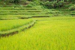 Fileds do arroz em Vietname na montanha Fotos de Stock Royalty Free