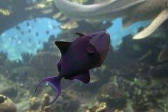 filefish Obrazy Royalty Free