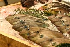 Filefish, Tokio, Japonia Obrazy Royalty Free