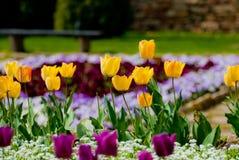 Fileira amarela das tulipas no jardim Foto de Stock Royalty Free
