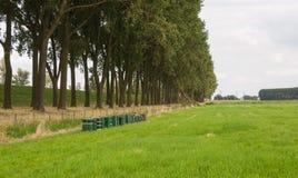 A fileira da abelha verde acumula em uma paisagem rural Fotos de Stock Royalty Free