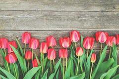 A fileira da tulipa brilhante do vermelho rico floresce na haste Fundo de madeira com espaço scopy do texto Mola e verão bem-vind Imagens de Stock Royalty Free