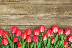 A fileira da tulipa brilhante do vermelho rico floresce na haste Fundo de madeira com espaço scopy do texto Mola e verão bem-vind Fotografia de Stock