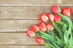 A fileira da tulipa brilhante do vermelho rico floresce na haste Fundo de madeira com espaço scopy do texto Mola e verão bem-vind Fotos de Stock