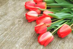 A fileira da tulipa brilhante do vermelho rico floresce na haste Fundo de madeira com espaço scopy do texto Mola e verão bem-vind Fotografia de Stock Royalty Free