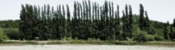 Fileira das árvores fotografia de stock