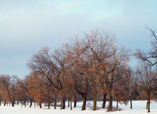Fileira das árvores Imagem de Stock Royalty Free
