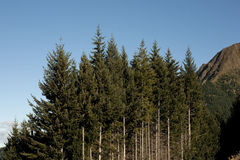 Fileira das árvores Imagem de Stock