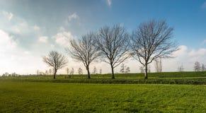 Fileira das árvores ao lado de um dique Fotos de Stock