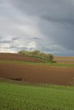 A fileira das árvores baren campos Foto de Stock