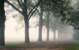 Fileira das árvores na pista nevoenta imagens de stock