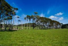 Fileira das árvores no campo verde Imagem de Stock Royalty Free
