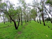 Fileira das árvores no platô verde Fotografia de Stock Royalty Free