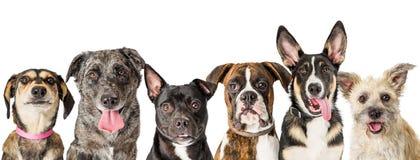 Fileira das caras misturadas bonitos do cão da raça imagem de stock royalty free