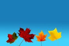 Fileira das folhas de outono Fotos de Stock