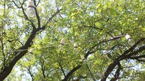 Fileira das luzes no cair do jardim na árvore decor filme
