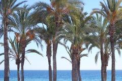 Fileira das palmeiras na praia com mar azul Imagens de Stock