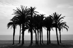 Fileira das palmeiras na praia com monochrome do mar Foto de Stock Royalty Free