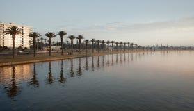 Fileira das palmeiras por um rio Foto de Stock