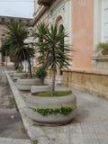 Fileira das plantas em uns grandes potenciômetros em um pavimento em Lecce central, Puglia, Itália do sul foto de stock royalty free