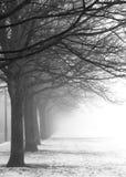 Fileira de árvores enevoadas foto de stock