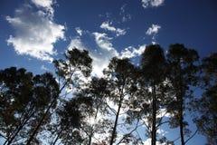 Fileira de árvores mostradas em silhueta contra um céu azul Fotografia de Stock Royalty Free