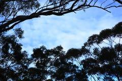 Fileira de árvores mostradas em silhueta contra um céu azul Foto de Stock Royalty Free