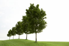 Fileira de árvores verdes Fotografia de Stock Royalty Free