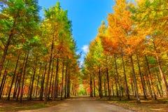 Fileira de árvores verdes Imagens de Stock Royalty Free