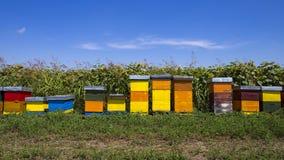 Fileira de colmeias de madeira coloridas com os girassóis no fundo Foto de Stock Royalty Free