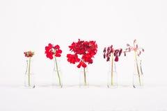 Fileira de flores vermelhas nos frascos de vidro Imagens de Stock Royalty Free