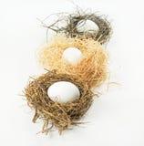 Fileira de ninhos do pássaro com ovos Fotografia de Stock Royalty Free